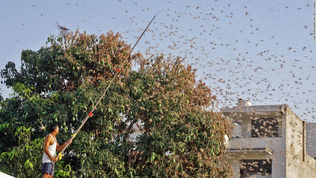 India is using drones and fire trucks to fight its worst locust invasion in almost 30 years