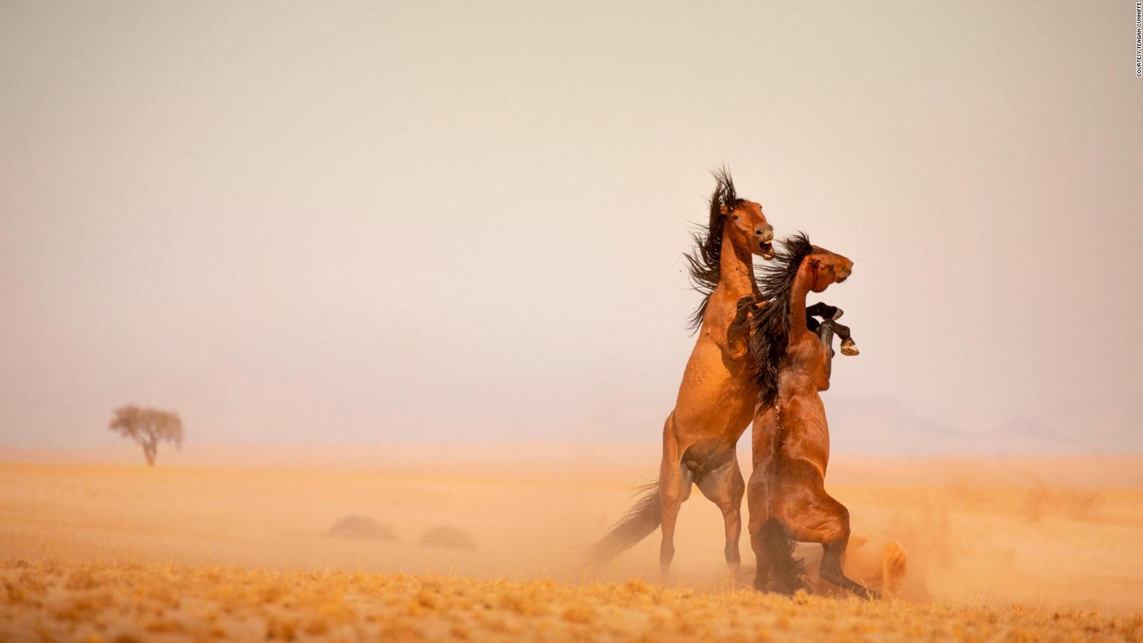 Namibia S Last Wild Horses Face Perilous Future Cnn Travel