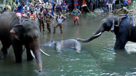 A dead elephant is retrieved from a river in the Palakkad district of Kerala.