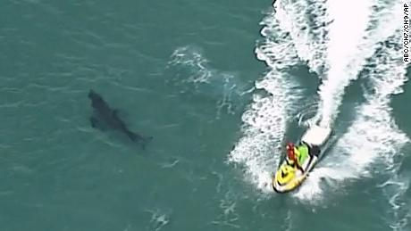 A jet ski passes over a shark swimming along the coast of Kingscliff, Australia, on Sunday, June 7.