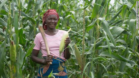 Babban Gona provides agricultural services to smallholder maize farmers in Nigeria.