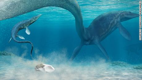 This is an artist's nterpretation of a baby mosasaur shortly after hatching. The mother mosasaur is laying an egg while a baby mosasaur swims towards the surface.