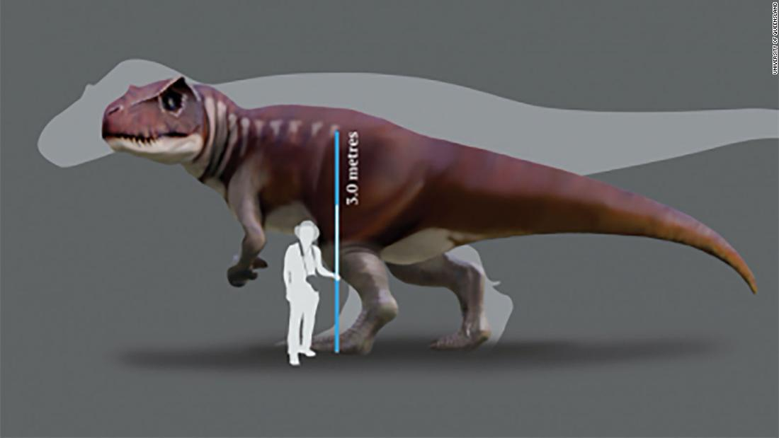 A reconstruction of a Jurassic dinosaur track-maker from southern Queensland in front of a silhouette of the largest known T. rex.  https://www.uq.edu.au/news/article/2020/06/tracking-australia%E2%80%99s-gigantic-carnivorous-dinosaurs  University of Queensland