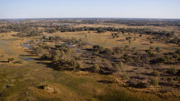 The Okavango Delta in Botswana showcases a patchy landscape where the ability to plan results in a huge survival payoff.