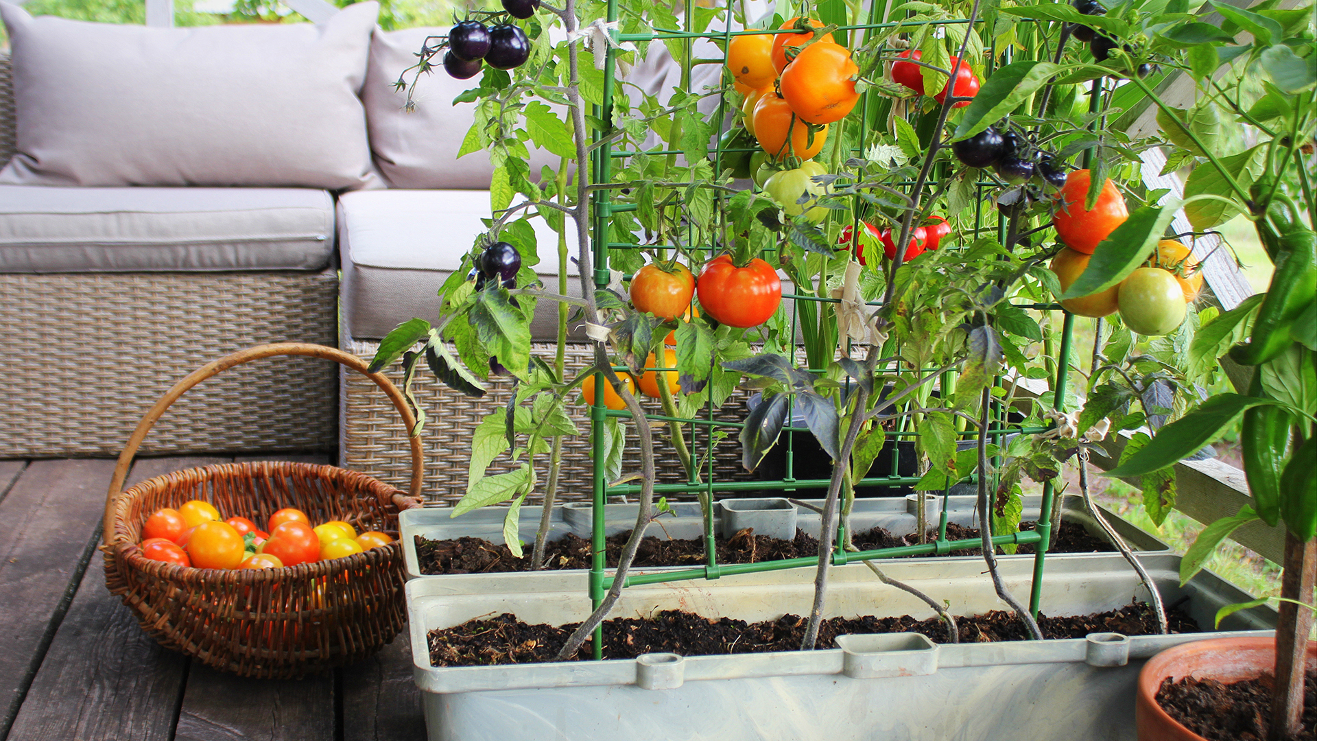 Garden Ideas Easy Vegetables To Grow In Backyard Gardens And Beyond Cnn Underscored