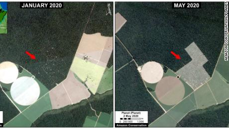 New satellite data analyzed by Amazon Conservation shows the extent of deforestation so far in 2020.
