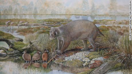 Giant wombat-like creatures, the size of black bears, once walked the earth