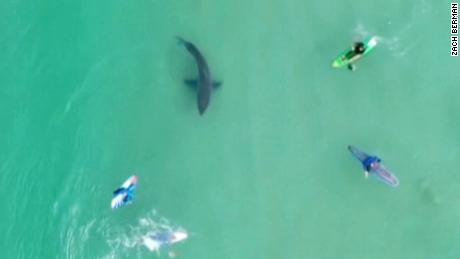 South Africa's sea rescue service has urged swimmers and surfers to be cautious after a spate of great white shark sightings and close encounters -- one of which was captured in astonishing drone footage released Tuesday. (Sea Rescue South Africa (NSRI)