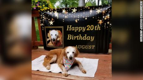 "August ""Augie"" turned 20 years old on April 24 and is now the oldest golden retriever in history."