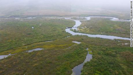 Beavers erected a dam and lodge  in a small stream north of Nome, southern Seward Peninsula in western Alaska.