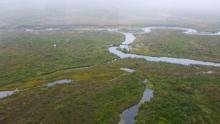 Beavers erect dams and huts in a stream north of Nome in southern Alaska and south of the Seward Peninsula.
