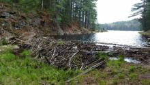 The beaver dam formed in the lake contains hotter water than the surrounding soil. They formed new water bodies and accelerated the melting of permafrost.