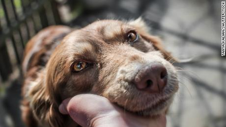 Your body can produce oxytocin after sustained eye contact with other people (and dogs).
