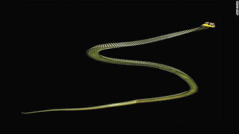 The paradise tree snake lives in South and Southeast Asia.