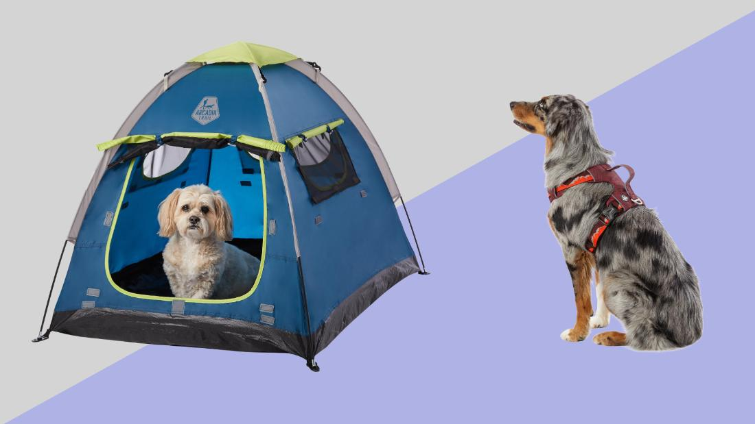 Keep your summer fun pet-safe and pet-friendly with top outdoor pet gear