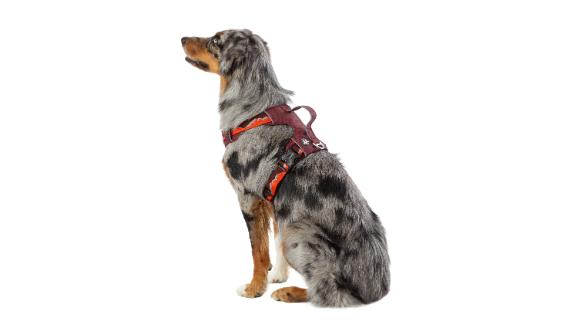 Arcadia Trail Lightweight Harness