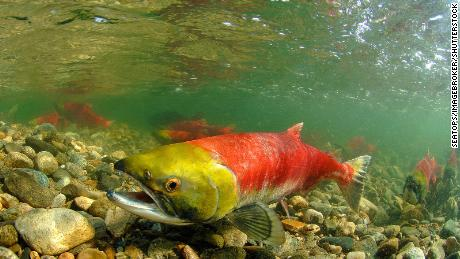 Warming temperatures threaten hundreds of fish species the world relies on, study finds