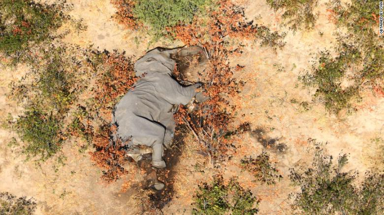 Images obtained by CNN show many of the elephants lying