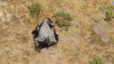 Hundreds of elephants die from mysterious causes in Botswana