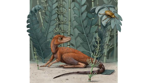 This illustration shows Kongonaphon kely, a newly described reptile that was an early ancestor of dinosaurs and pterosaurs. The fossil was found in Madagascar. It lived about 237 million years ago.