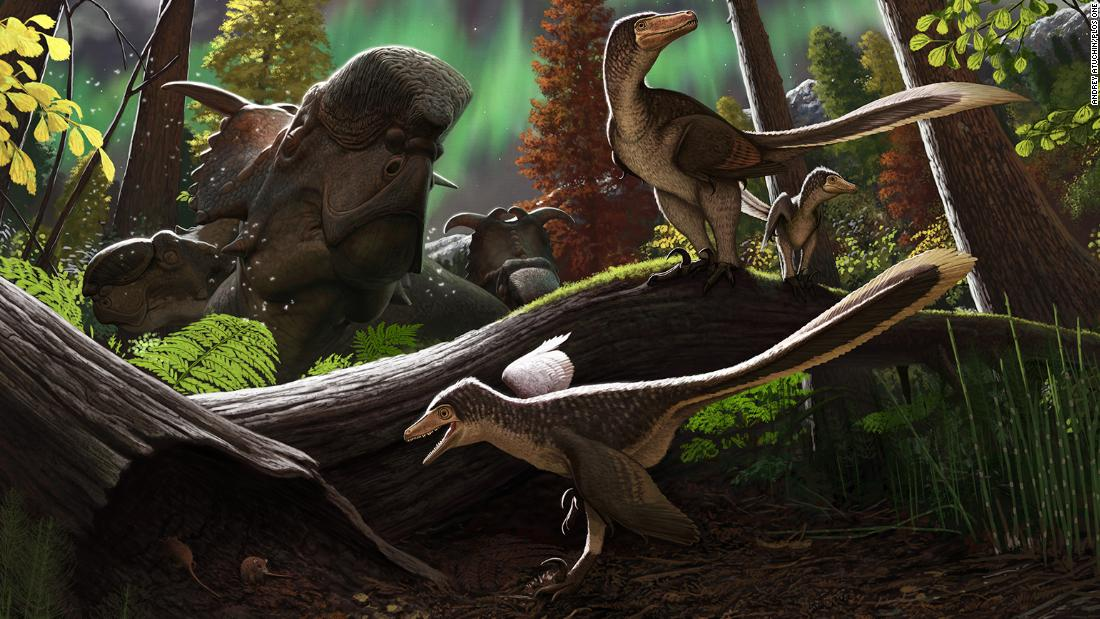Paleontologists may have identified a new species of dinosaur that lived, mated and nested in the Arctic 70 million years ago.Analysis of the tip of a
