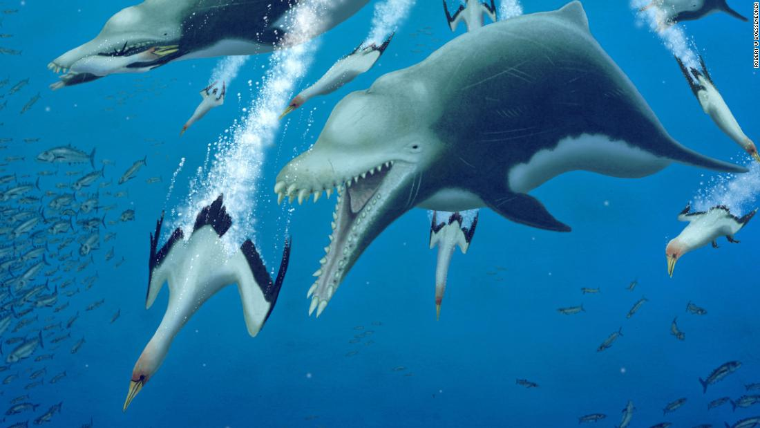 An extinct giant dolphin behaved like a killer whale, study finds