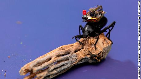 Scientists strapped a tiny camera to a beetle to test just how small video technology can get