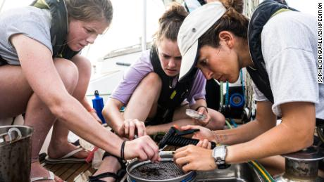 The all-female crew sailing the world to study plastic pollution