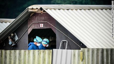An infected mink farm in Deurne, the Netherlands, on June 6 as animals were culled on 25 farms.
