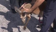 kangeroo fort lauderdale 2