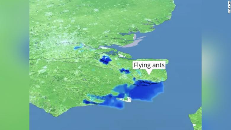 It's not rain, it's a swarm of flying ants.
