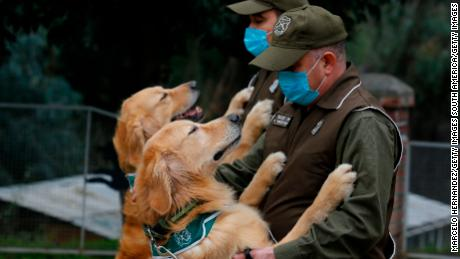 Chile wants Covid-19 sniffer dogs to help reopen public spaces