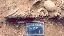 Massacred 10th century Vikings found in a mass grave at St John's College, Oxford, were part of the study.
