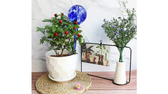 Brajttt Plant Watering Globes
