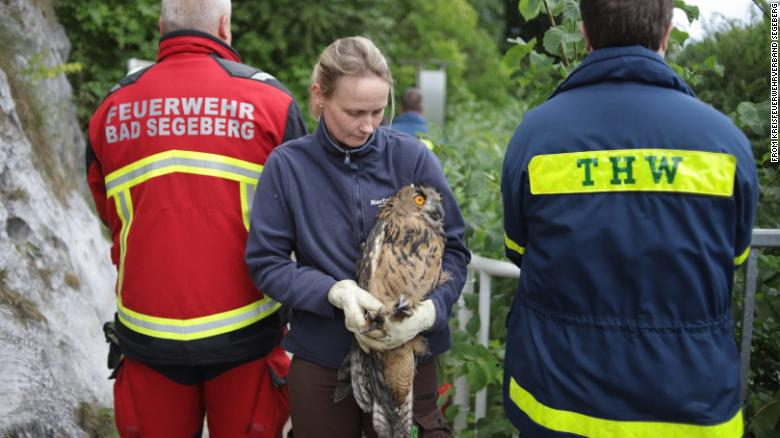 The owl young eagle owl is now being looked after in a local bat sanctuary.