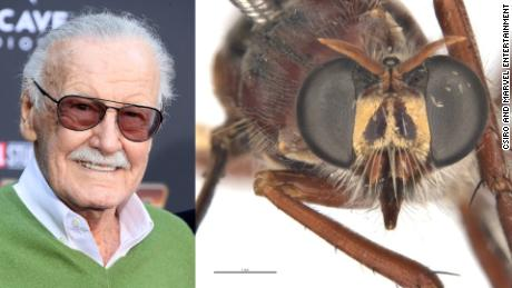 Marvel Comics icon Stan Lee and the Daptolestes leei fly.