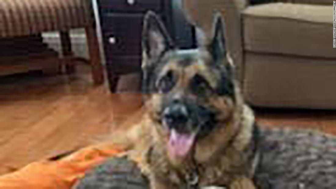 First dog to test positive for Covid-19 in the US, Buddy the German shepherd, has died thumbnail