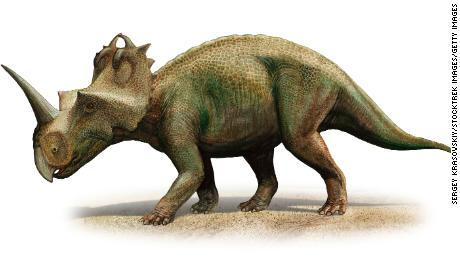 Centrosaurus apertus, a prehistoric era dinosaur from the Late Cretaceous period.