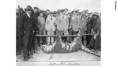 The tiger that killed two police officers in Hong Kong in 1915 is displayed in the city.