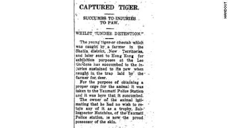 A Hong Kong news report from 1929 details how a tiger that was captured in the city died in captivity there.