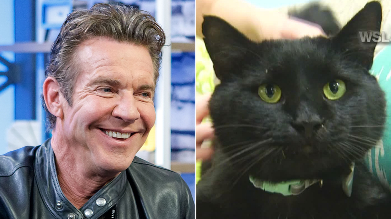 Dennis Quaid the man, left, is adopting Dennis Quaid the cat, right.