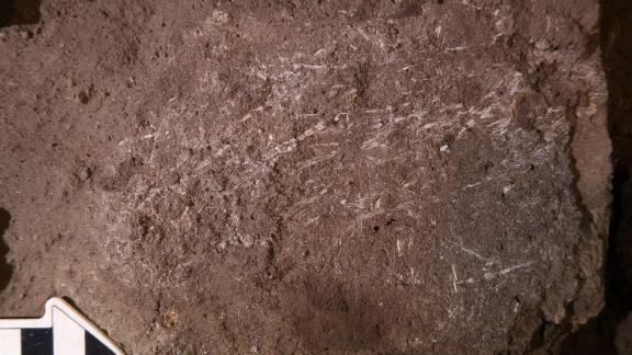 Researchers uncovered the fossilized fragments of 200,000-year-old grass bedding in South Africa