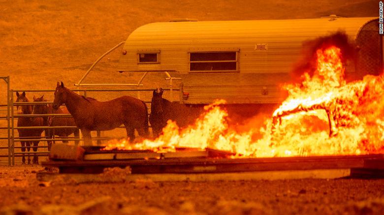 Caii stau marți într-o incintă, în timp ce Complexul LNU trage lacrimi prin comunitatea Flat Spanish din județul Napa neîncorporat.