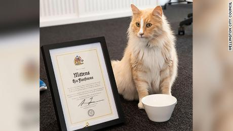 Mittens was given the key to the city of Wellington in May.