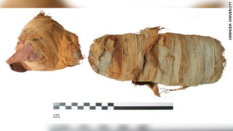 Scientists have 'digitally unwrapped' some Egyptian animal mummies, including a kitten and cobra