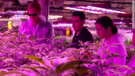 Chris Baca (The Clinic, center) explains to Charlie Berger (Denver Beer) and Kaitlin Urso (Colorado Department of Public Health and Environment) how the vegetative state of growing cannabis works inside The Clinic's grow operation.