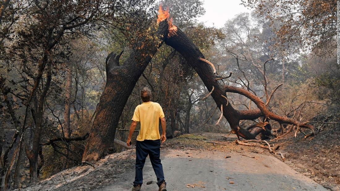 A man looks at a tree blocking his way while attempting to go home after a fire ravaged Vacaville, California, on August 20.
