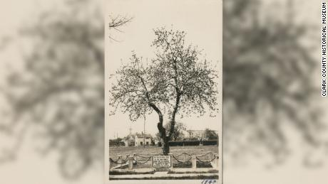 The Old Apple Tree in a picture from 1940.