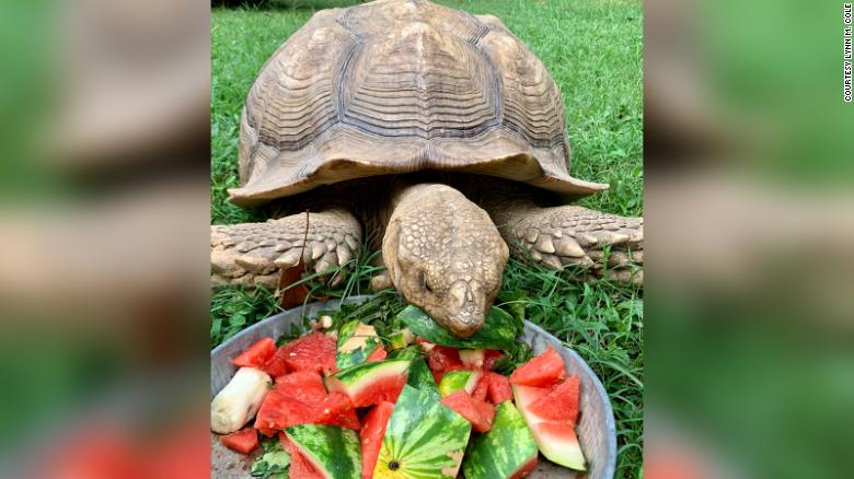 Solomon enjoys a bowl of his favorite foods upon his return home after being missing for 74 days.