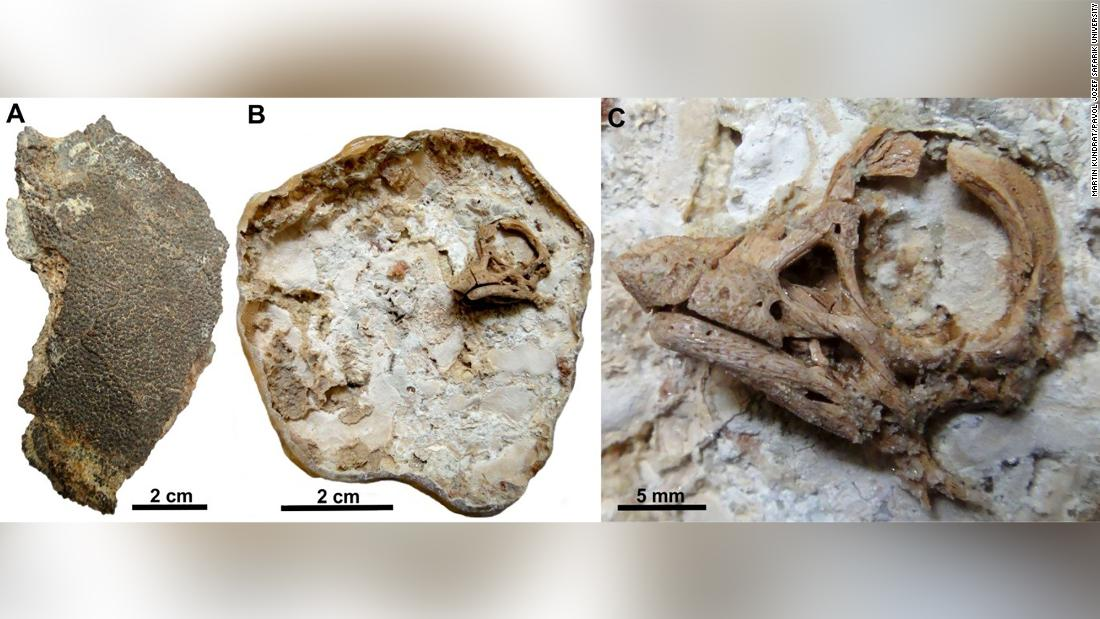 A titanosaurian sauropod hatchling was found inside a dinosaur egg from 80 million years ago and its embryonic skull was still preserved.